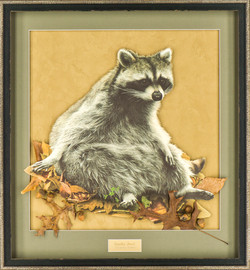 Reclining Raccoon