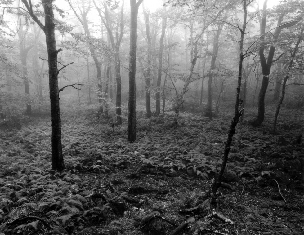 Carskill Forest Preserve, New York