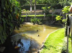 Lagoa com patos