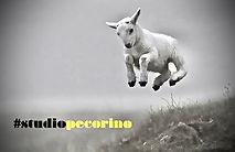 Studio Pecorino 86.JPG