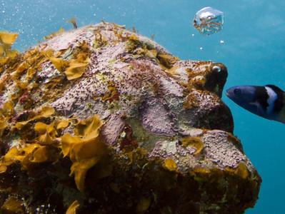 מוזיאונים מתחת למים