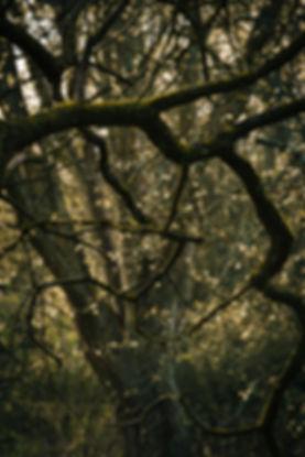 GlimpsingAirPockets (Promo)-28.jpg
