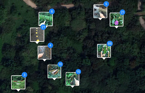 Mapping 1.jpg