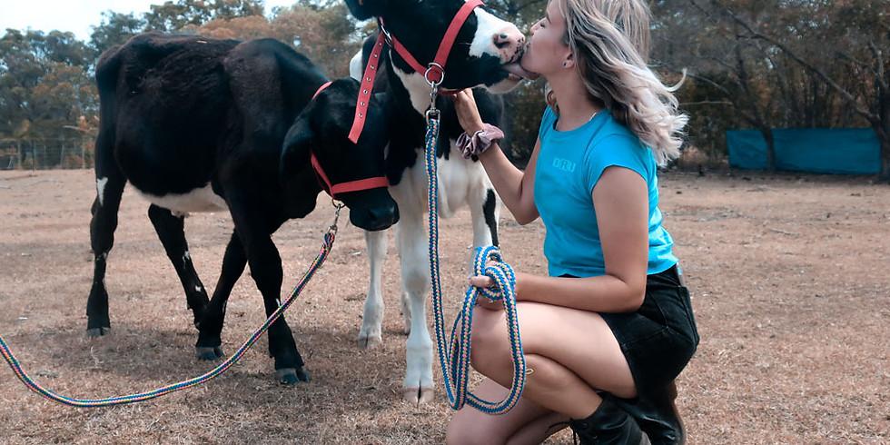 Tuesday Morning Farm Rescue Tour