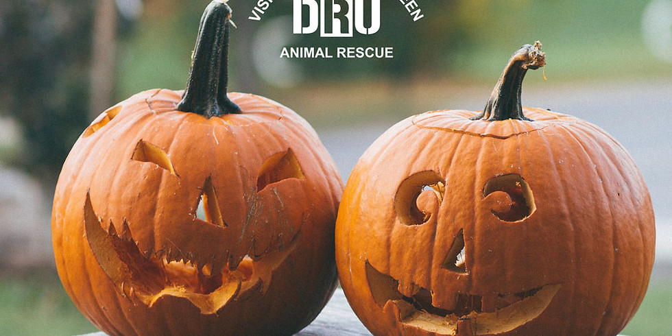Sunday Afternoon Halloween Animal Rescue Tour