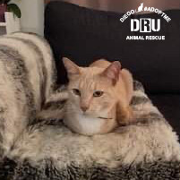 Deathrow-Unchained-Cat-Rescue.jpg