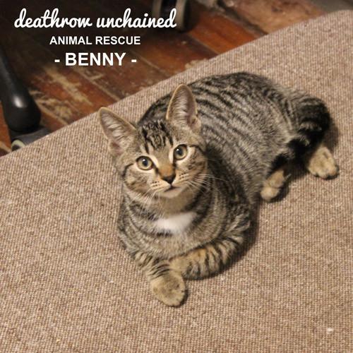 Benny.JPG