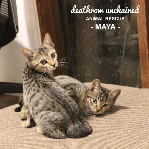 Maya.JPG