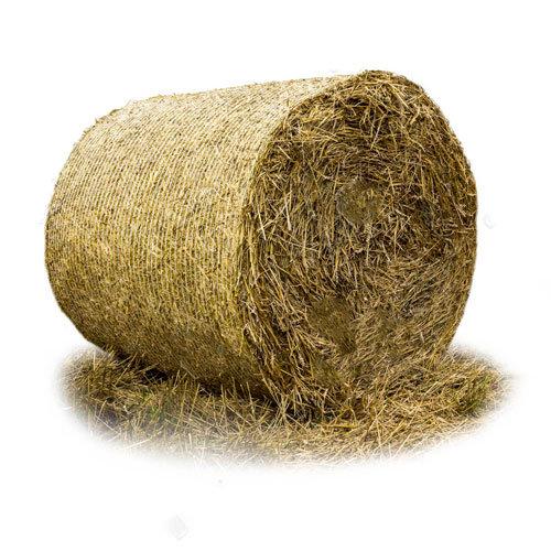 Shout us a Large Bale