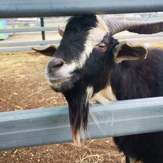 Farm Adoptions