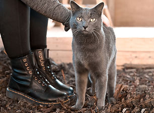 Cat-Team.jpg