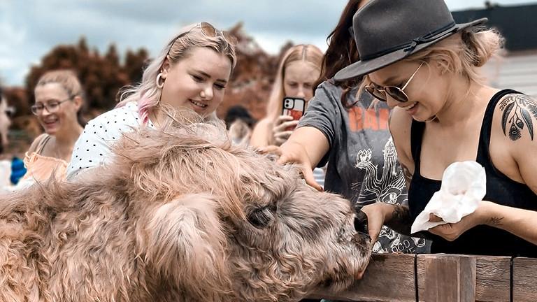 Saturday Morning Animal Rescue Tour