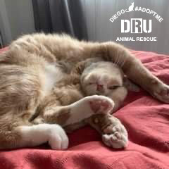 Deathrow-Unchained-Cat-Rescue-2.jpg