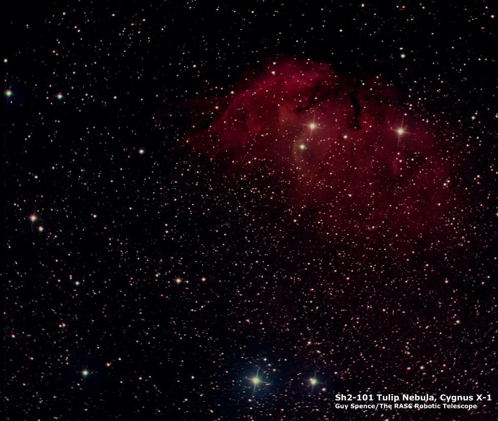 Tulip Nebula  -  Sh2-101