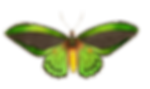 Colorful_Moth-2.png