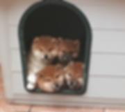 cucciole.png