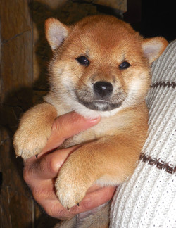 Asia Nankurunaisa 1 mese cucciola di Shi