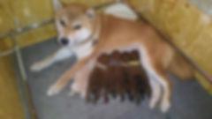 mila prima cucciolata.jpg