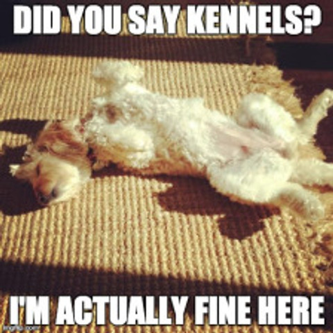 Did you say kennels?