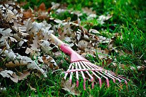 English: A pink metal leaf rake; apparently a ...