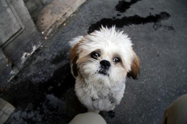 Cute Dog By Amaury Laparra at www.flickr.com