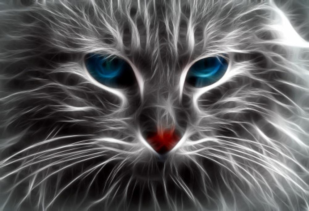 cat-1280122_1280