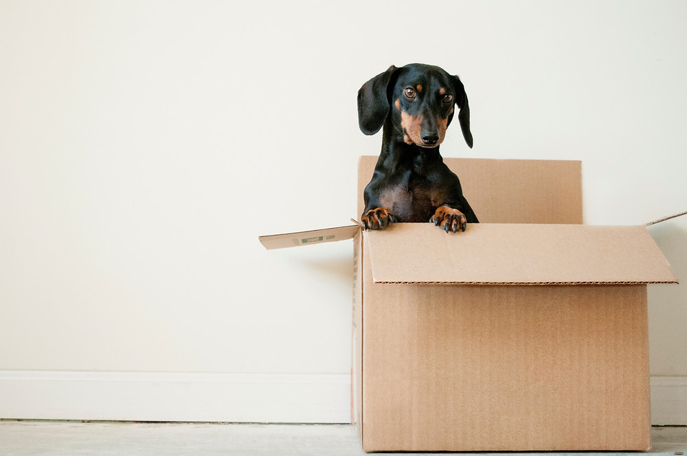 Dog climbing out of a packing box.