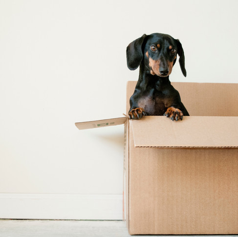 You Don't Have To Fit Into Society's One-Size-Fits-All Box