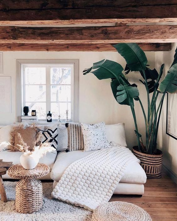 Cozy living room with sofa, blankets and large pot plant.