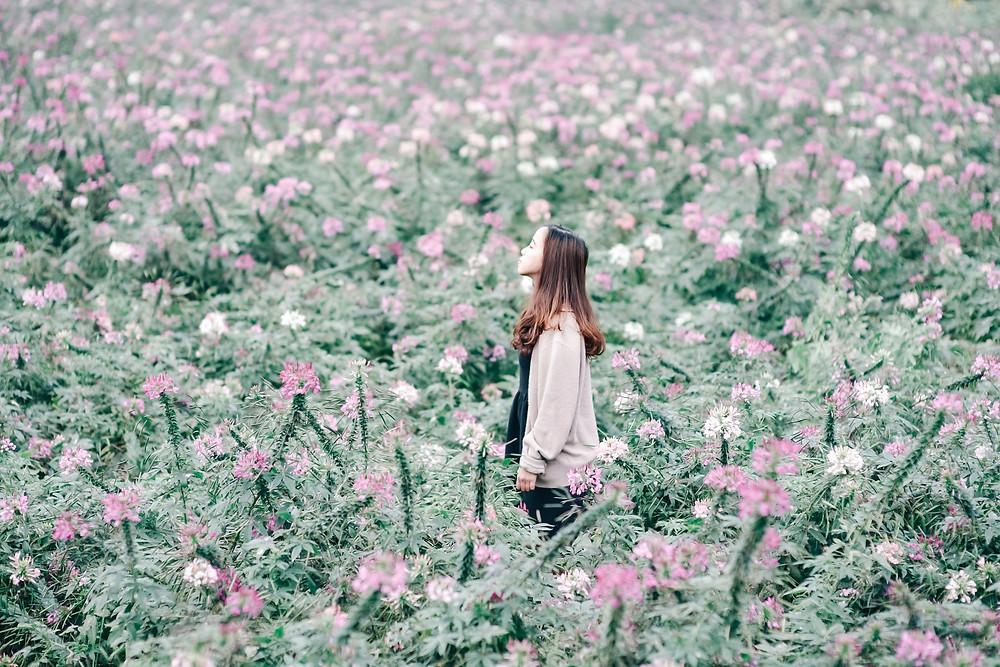 flowers-2094167_1920