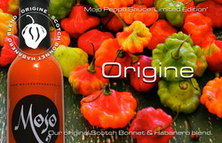 MPS Limited Edition Origine Advert 300DP