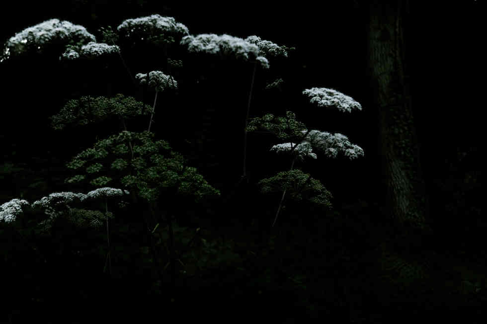 4_dark.jpg