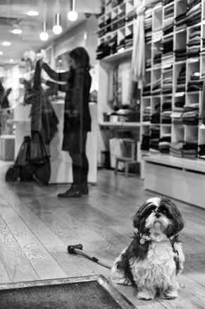 Hund lille.jpg