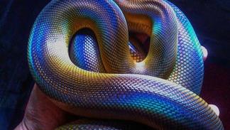 Arquétipos de poder |.| Cobra e Serpente.