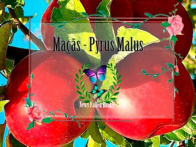 Herbológia |.| Maçãs - Pyrus malus