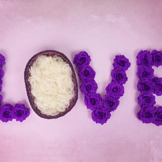 rose love purple