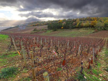 Visite des vignerons de Bourgogne