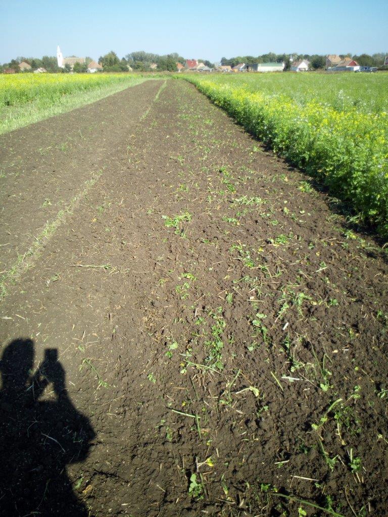Zöldtrágya bedolgozás