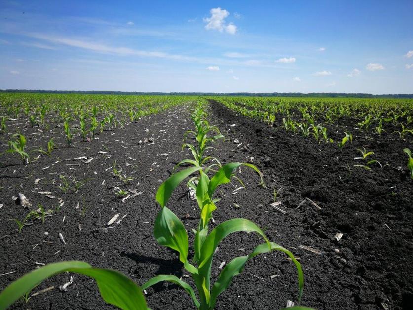 3-5 leveles bio kukorica