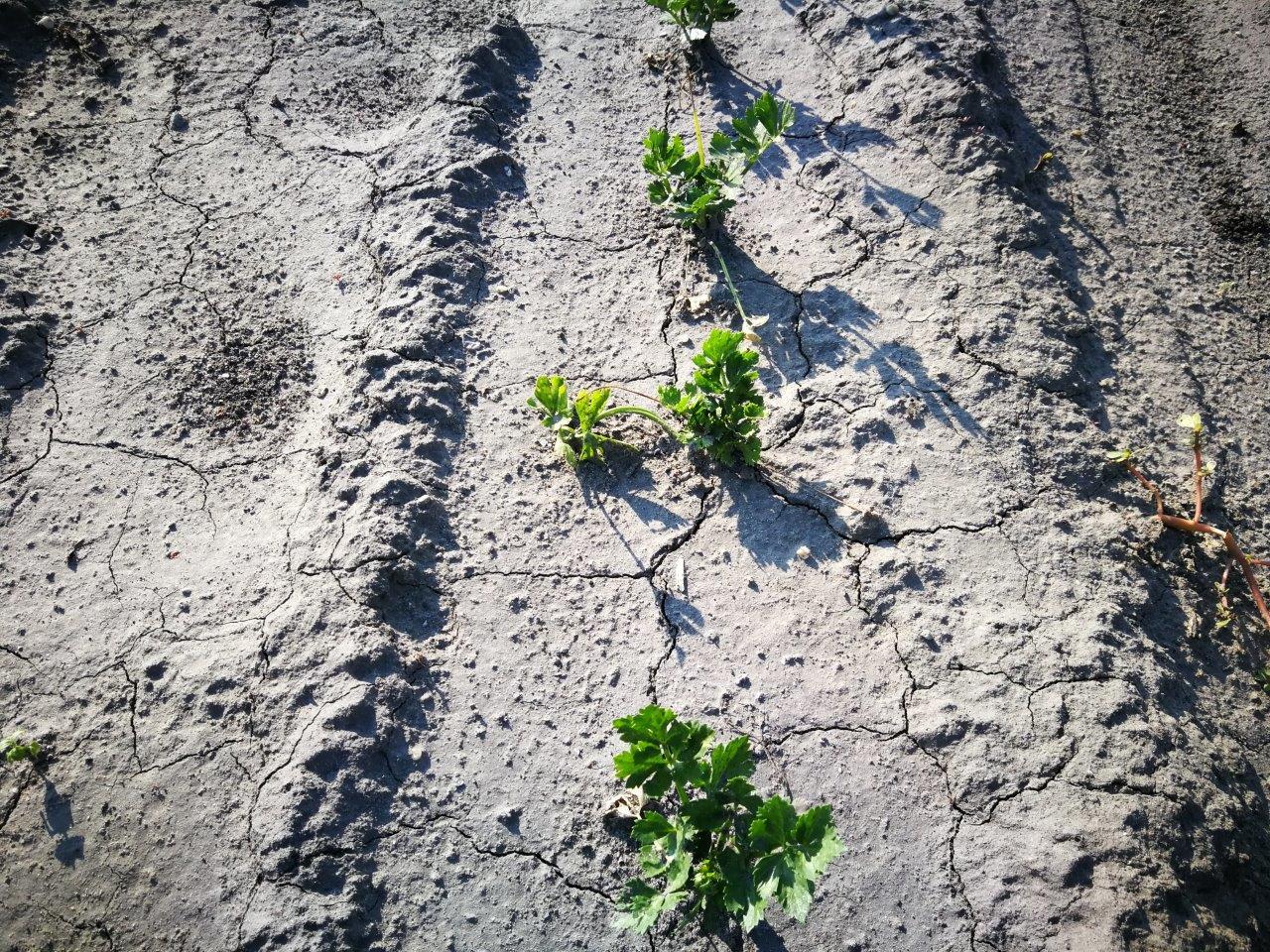 Lecserepesedett talaj