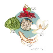 Illustration of Chinese herbs by Peggy Milovina-Meyer