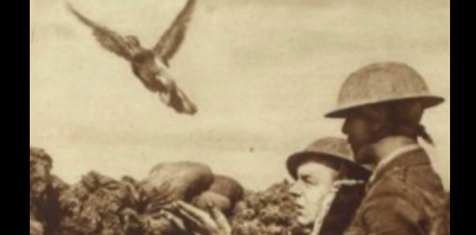 Pecking Away at the Schlieffen Plan: How Pigeons Provided the Allied Forces with Life Saving Communications during the First World War