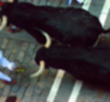 miura-bulls-13-01_edited.jpg