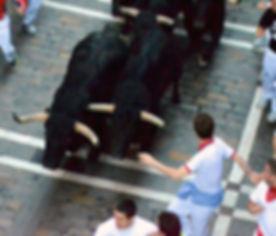muria_bulls-13-01e_edited.jpg