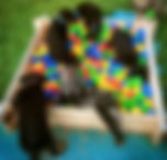 puppyschool-2_edited.jpg