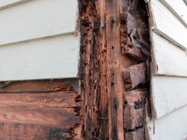 How Much Does A Termite Treatment Cost In Phoenix Arizona?