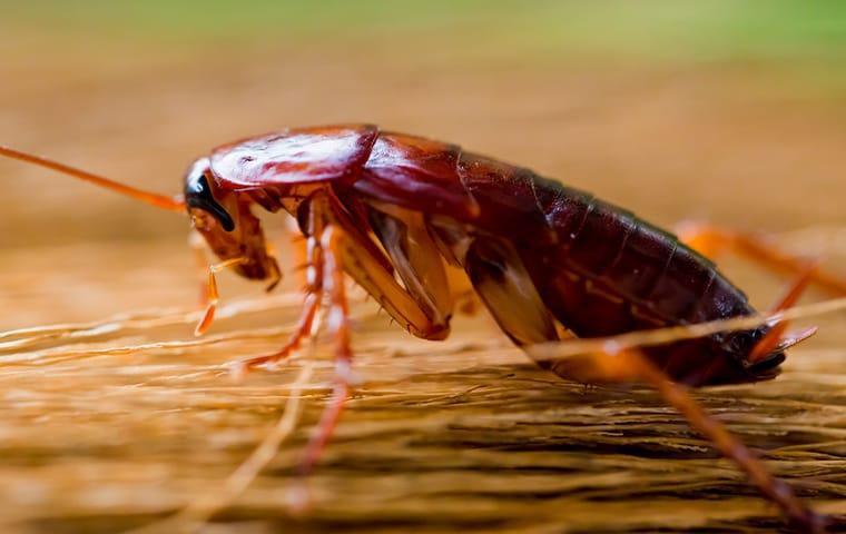 Roach Treatment Spray