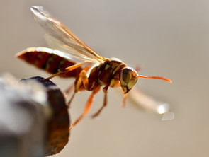 Three Things You Can Do To Avoid Stinging Insects In Buckeye