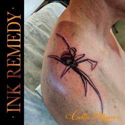 Red back spider by Curtis  @curtispettig