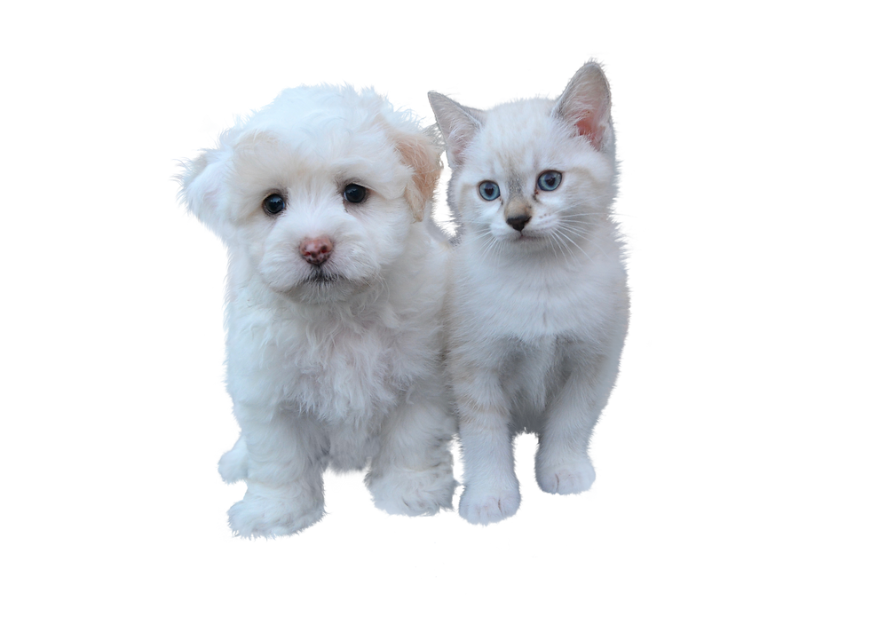 dog-and-cat-free-3484559_1920.png